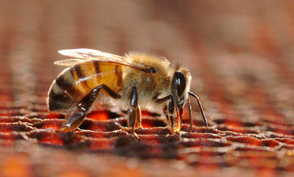 imagen-expertos-nutricion-apicola-dadelos-dadelosagricola.com