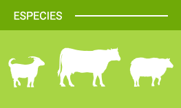 cabras-ovejas-vacas-1-dadelosagricola.com