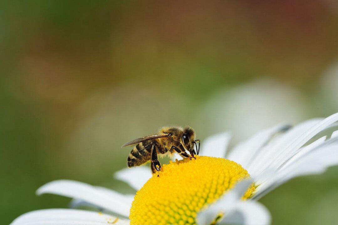 alimentacion-abejas-2-dadelosagricola.com