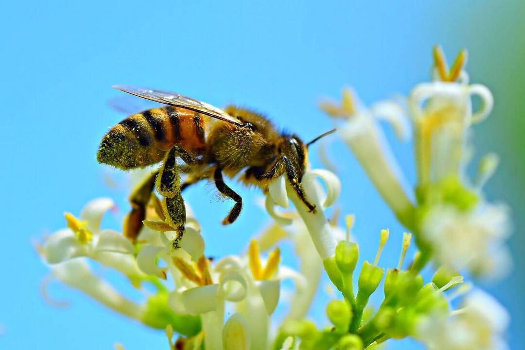 alimentacion-abejas-dadelosagricola.com