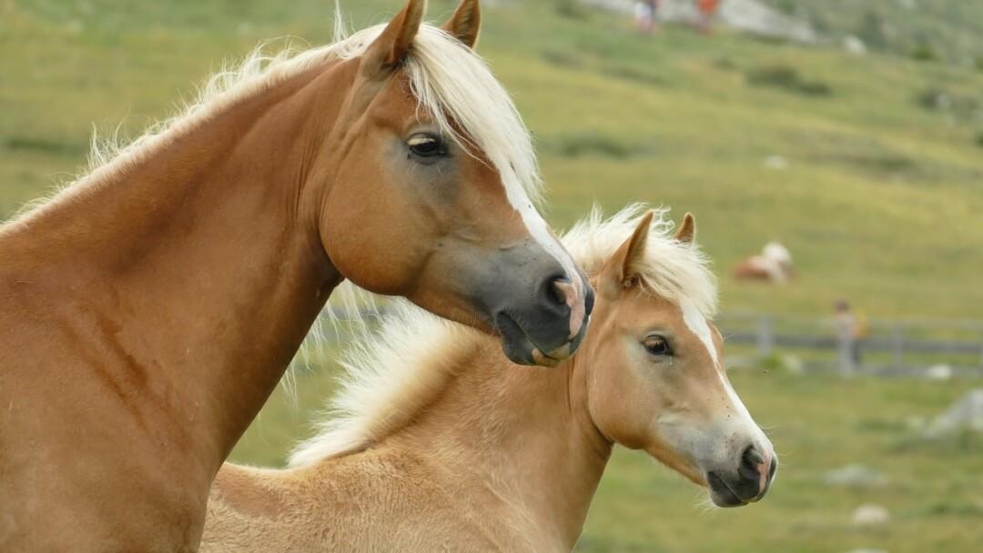 alimentacion-caballos-dadelosagricola.com