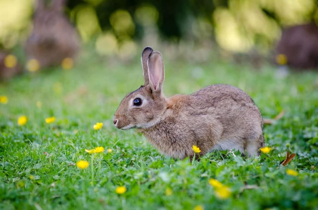 alimentacion-conejos-dadelosagricola.com
