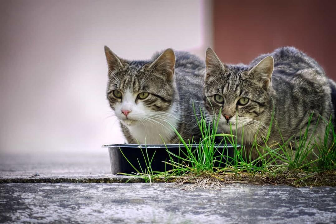 alimentacion-gatos-dadelosagricola.com