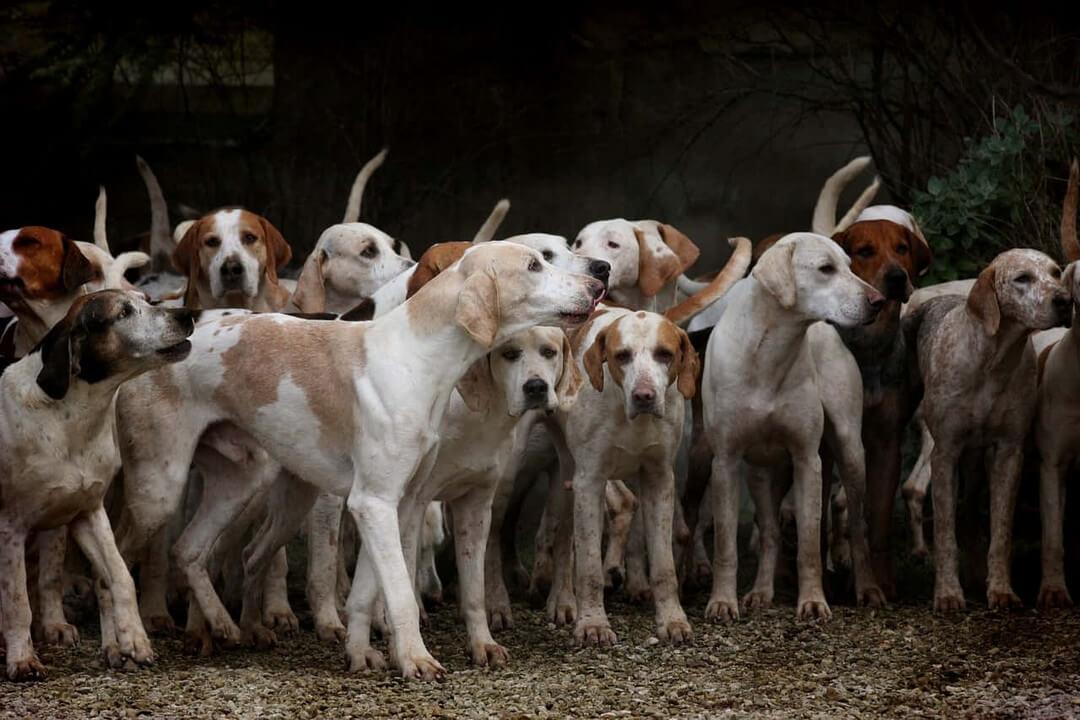 alimentacion-perros-dadelosagricola.com