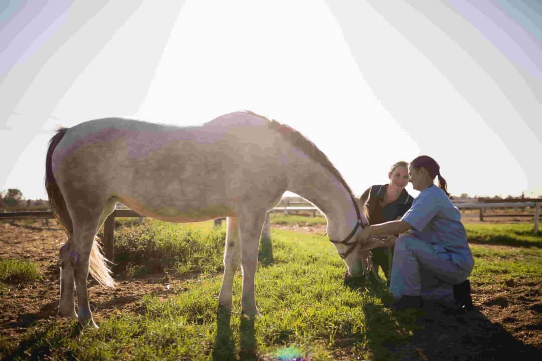 salud-animal-01-scaled-dadelosagricola.com